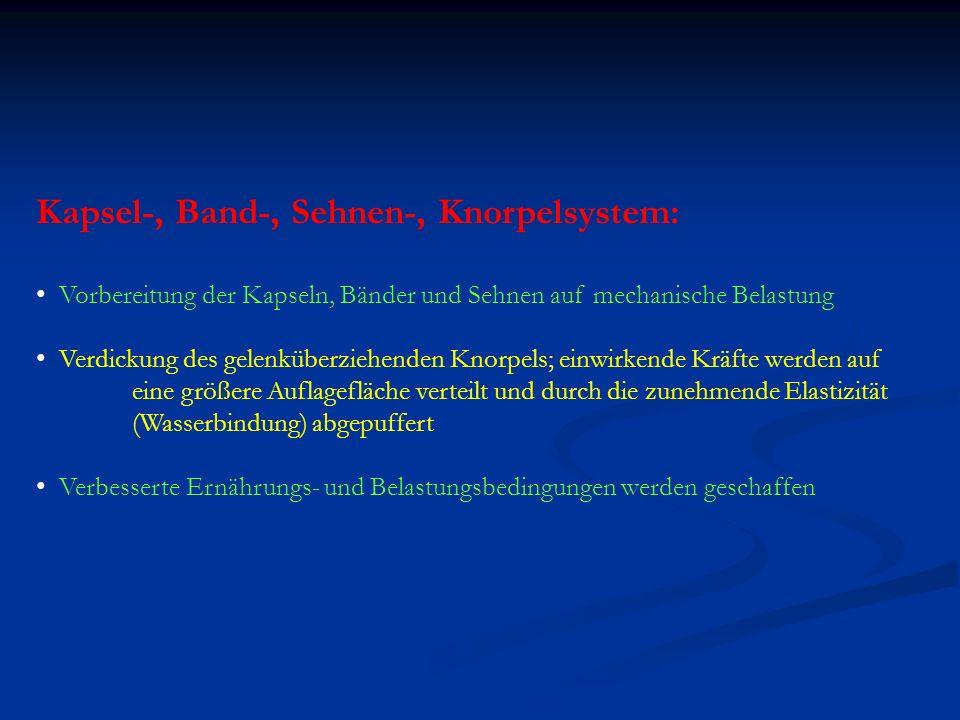 Kapsel-, Band-, Sehnen-, Knorpelsystem: Vorbereitung der Kapseln, Bänder und Sehnen auf mechanische Belastung Verdickung des gelenküberziehenden Knorp