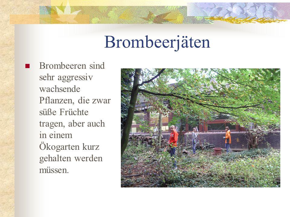 Brombeerjäten Brombeeren sind sehr aggressiv wachsende Pflanzen, die zwar süße Früchte tragen, aber auch in einem Ökogarten kurz gehalten werden müsse