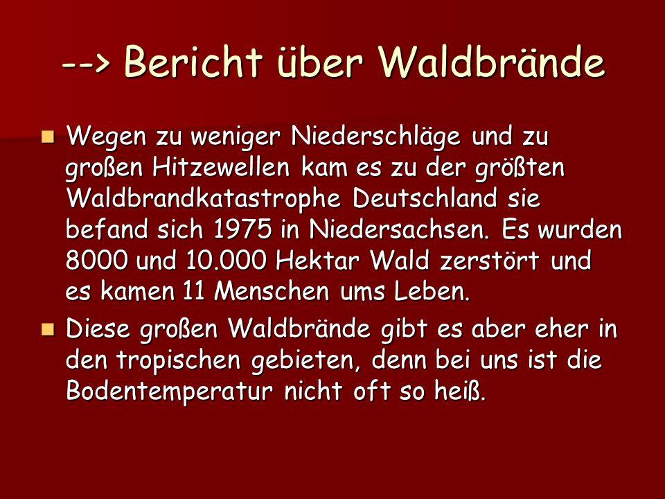 --> Bericht über Waldbrände Wegen zu weniger Niederschläge und zu großen Hitzewellen kam es zu der größten Waldbrandkatastrophe Deutschland sie befand sich 1975 in Niedersachsen.