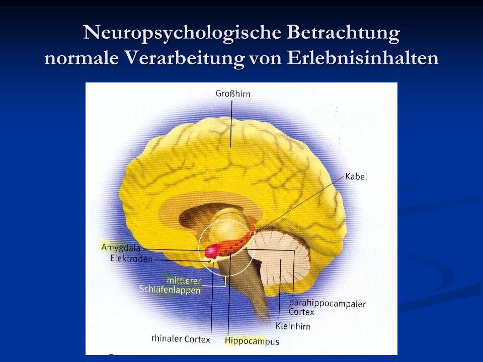 Hirnentwicklung Die Entwicklung des Gehirns ist abhängig von den Nutzungsbedingungen.