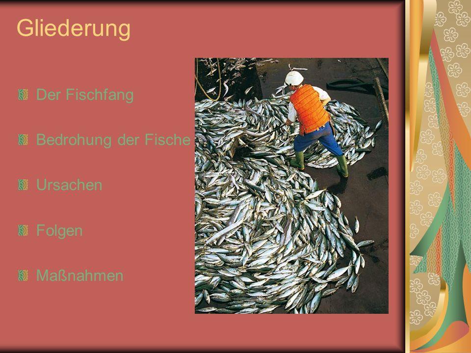 Gliederung Der Fischfang Bedrohung der Fische Ursachen Folgen Maßnahmen