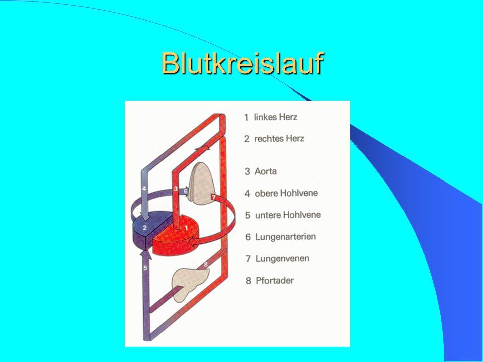 Basic Life Support (BLS) A- Atemwege freimachen und freihalten – Manuelles Ausräumen – Absaugen – Kopf überstrecken / Guedel Tubus einlegen B- Beatmung – Beatmung Mund zu Mund oder Mund zu Nase – Beatmung mit Beatmungsbeutel und Maske C- Circulation – Bei Pulslosigkeit oder fehlenden Lebenszeichen Thoraxkompression (D- Defibrillation)
