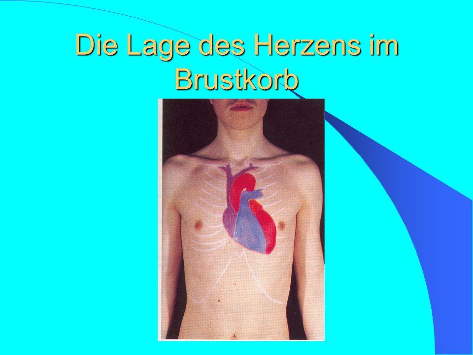 Blutkreislauf