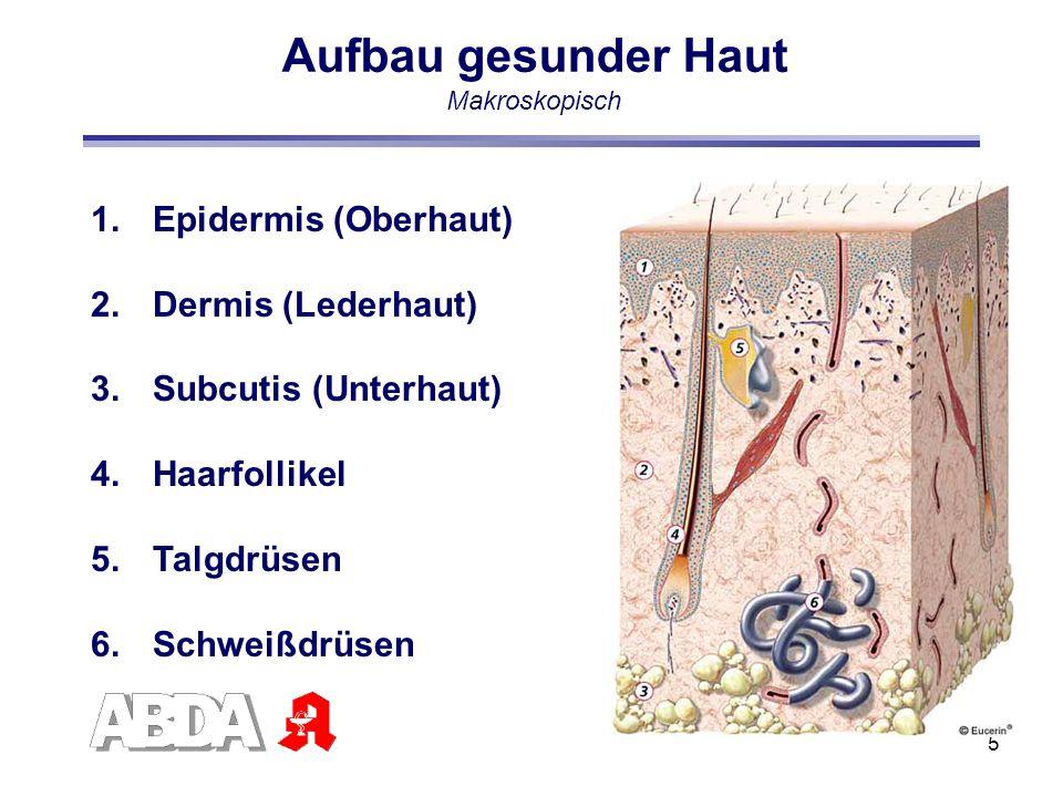 5 1.Epidermis (Oberhaut) 2.Dermis (Lederhaut) 3.Subcutis (Unterhaut) 4.Haarfollikel 5.Talgdrüsen 6.Schweißdrüsen Aufbau gesunder Haut Makroskopisch