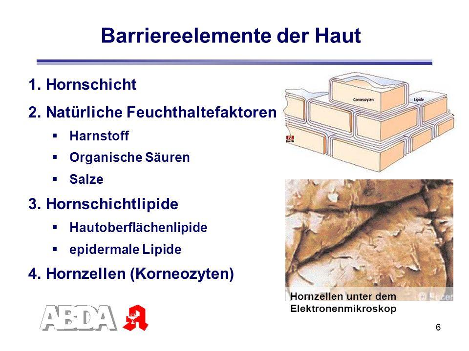 6 1.Hornschicht 2.Natürliche Feuchthaltefaktoren Harnstoff Organische Säuren Salze 3.Hornschichtlipide Hautoberflächenlipide epidermale Lipide 4.Hornz
