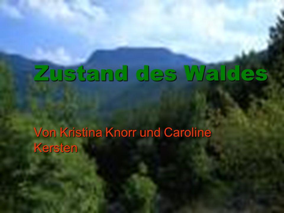 Zustand des Waldes Von Kristina Knorr und Caroline Kersten
