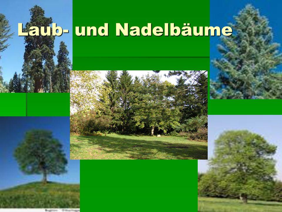 Laub- und Nadelbäume