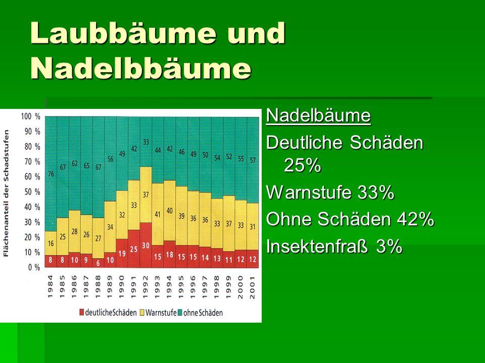 Laubbäume und Nadelbbäume Nadelbäume Deutliche Schäden 25% Warnstufe 33% Ohne Schäden 42% Insektenfraß 3%