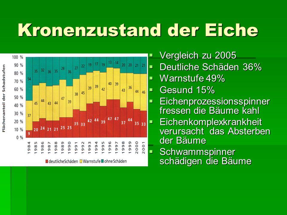 Kronenzustand der Eiche Vergleich zu 2005 Vergleich zu 2005 Deutliche Schäden 36% Deutliche Schäden 36% Warnstufe 49% Warnstufe 49% Gesund 15% Gesund