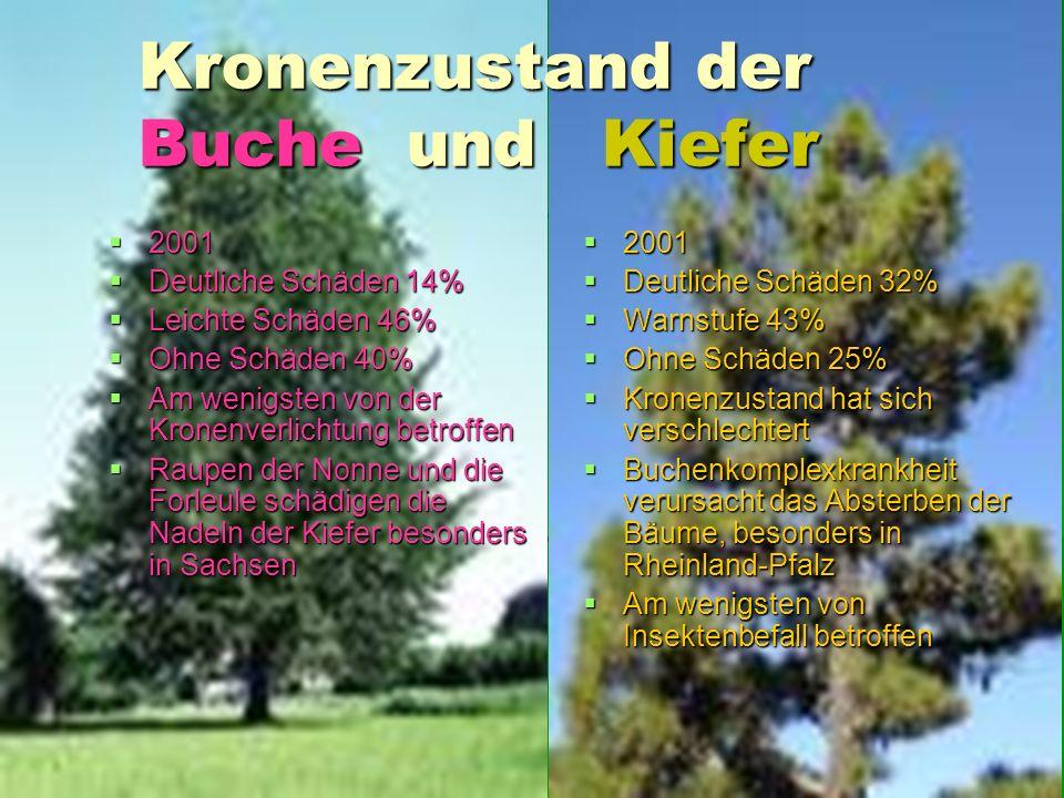 Kronenzustand der Buche und Kiefer Kronenzustand der Buche und Kiefer 2001 2001 Deutliche Schäden 14% Deutliche Schäden 14% Leichte Schäden 46% Leicht
