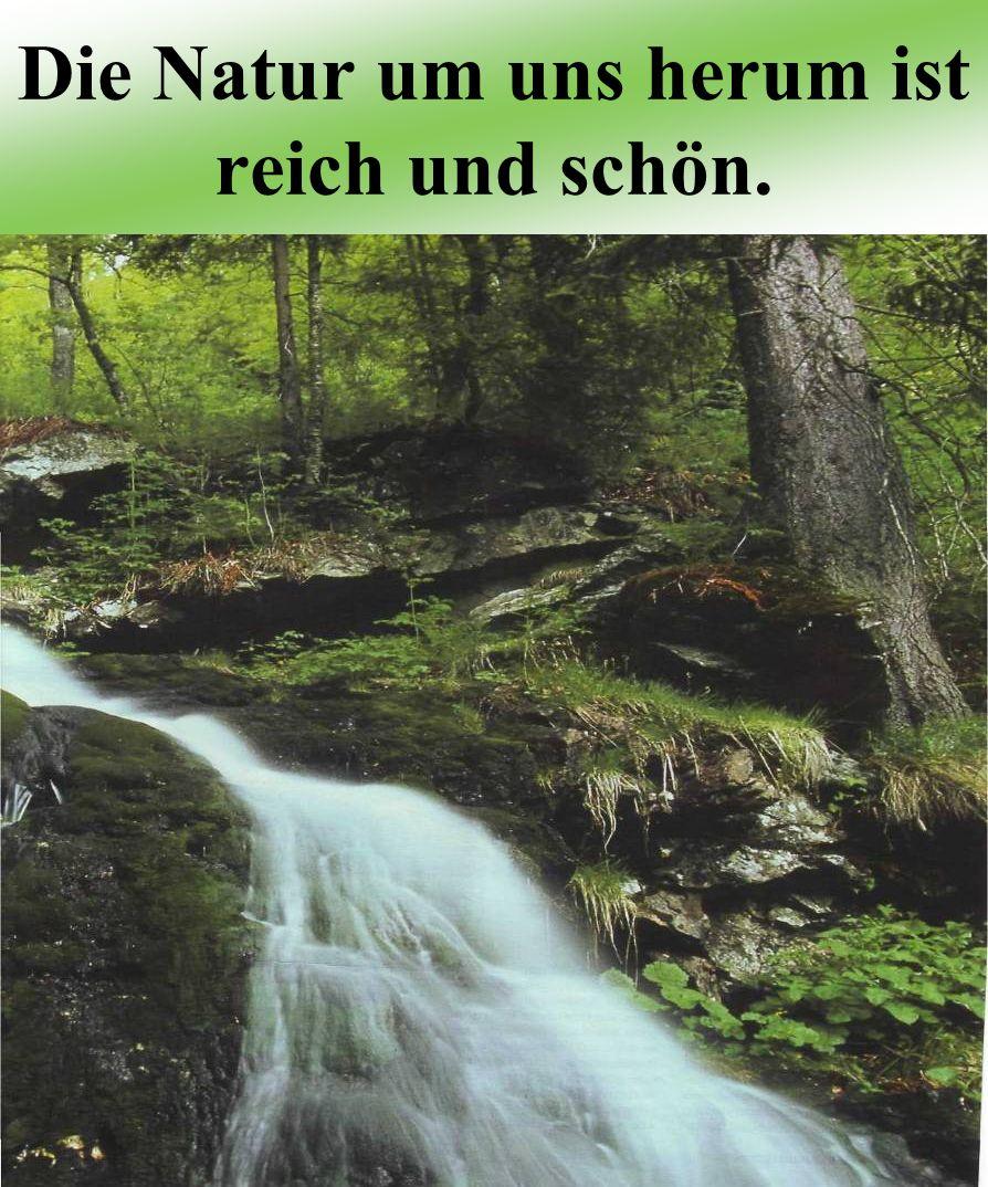 Die Natur um uns herum ist reich und schön.