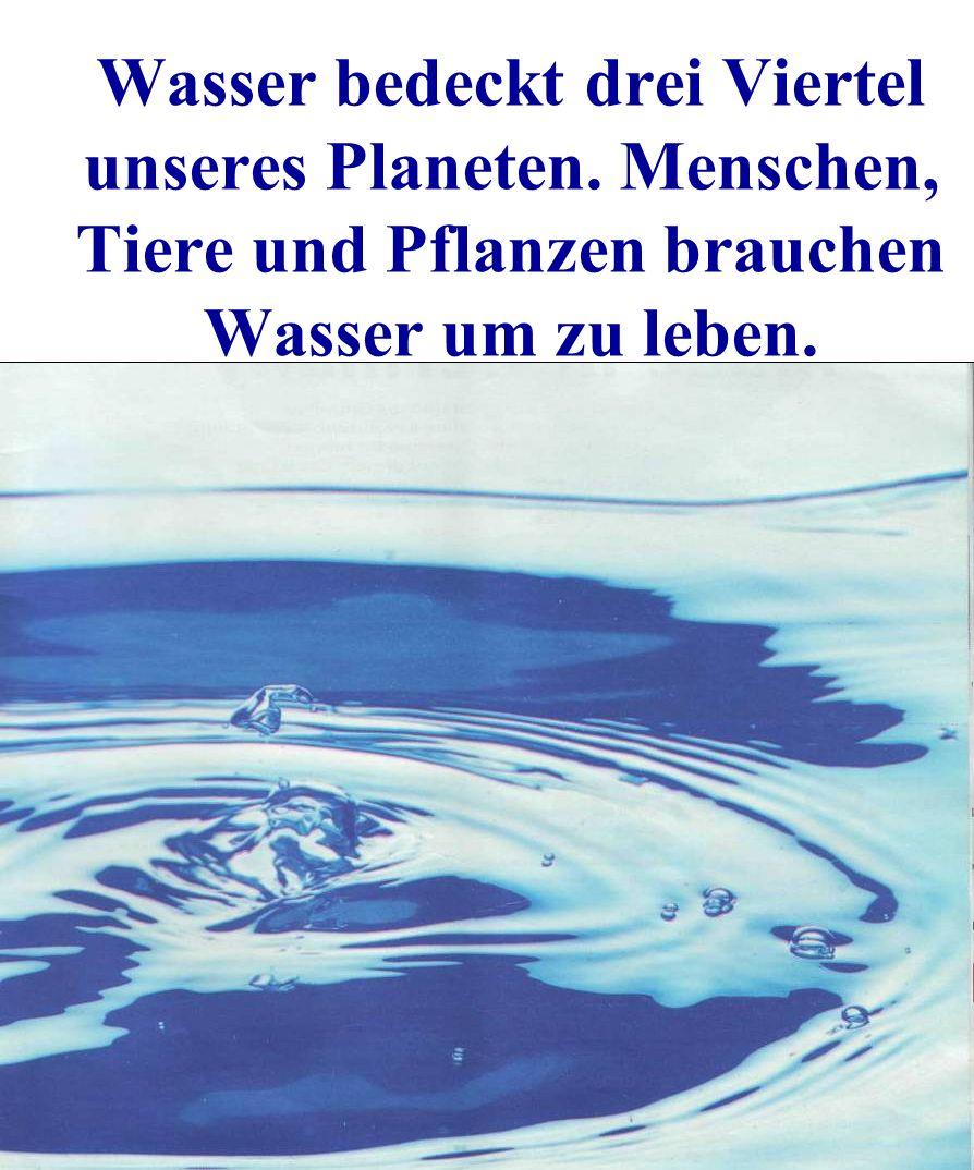 Wasser bedeckt drei Viertel unseres Planeten. Menschen, Tiere und Pflanzen brauchen Wasser um zu leben.