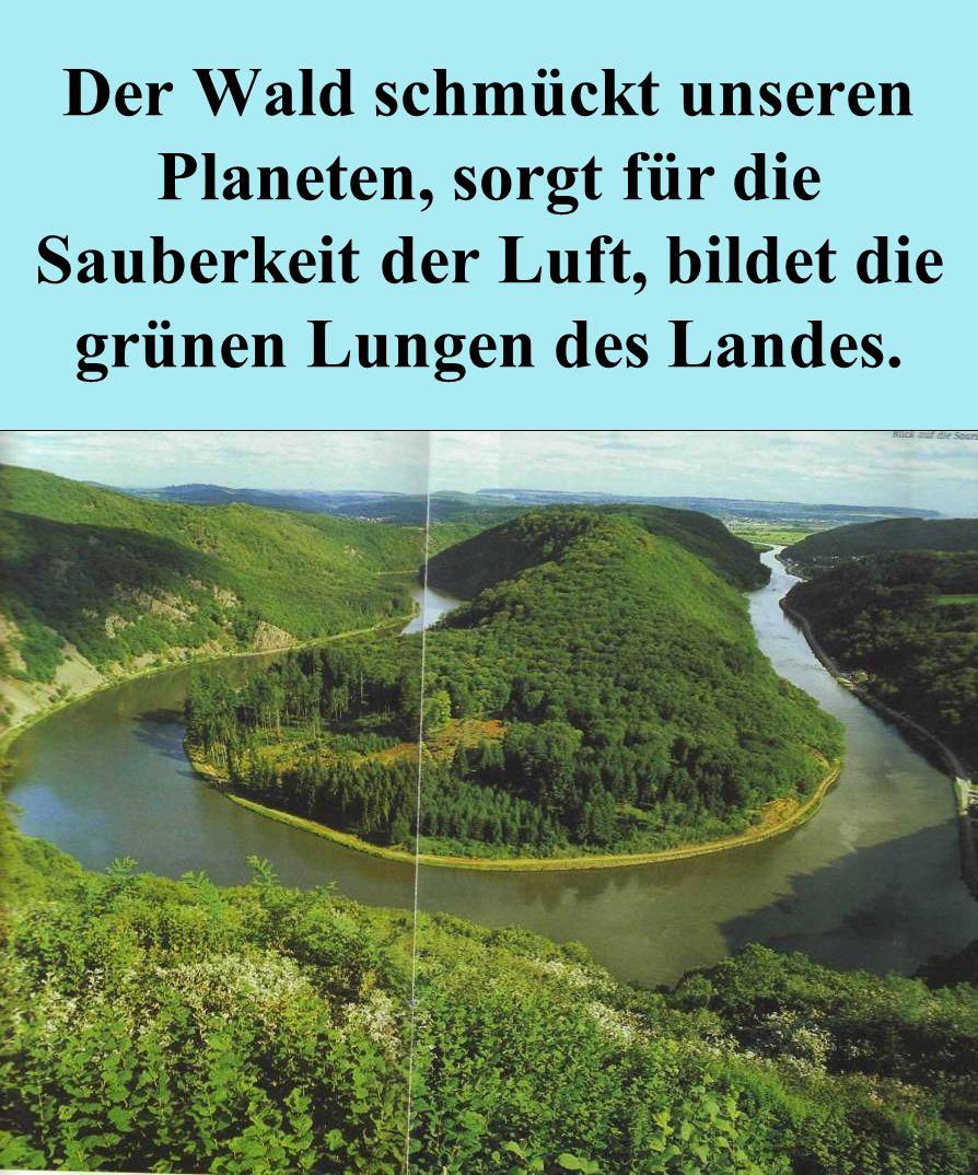 Der Wald schmückt unseren Planeten, sorgt für die Sauberkeit der Luft, bildet die grünen Lungen des Landes.