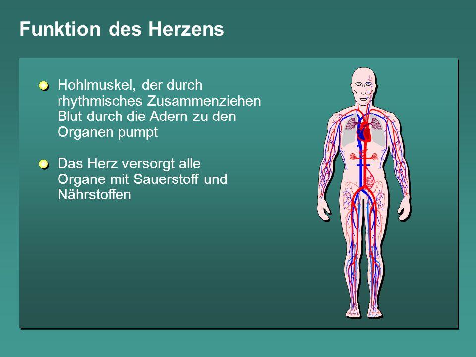 Funktion des Herzens Hohlmuskel, der durch rhythmisches Zusammenziehen Blut durch die Adern zu den Organen pumpt Das Herz versorgt alle Organe mit Sau