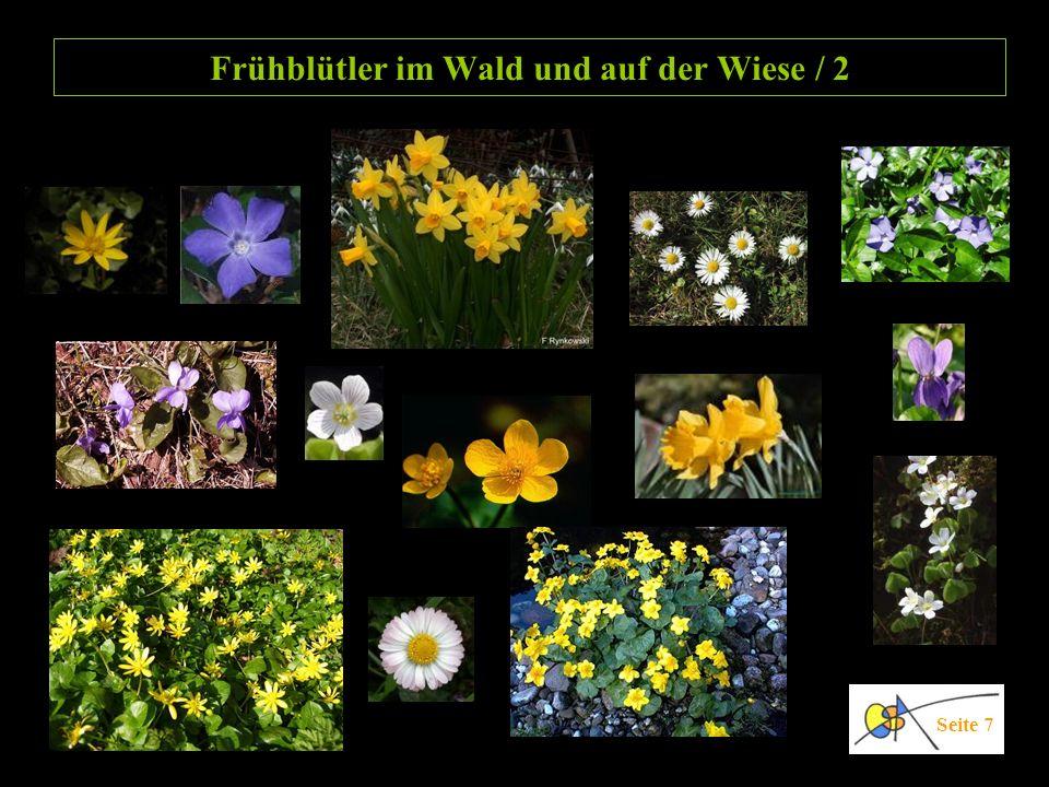 Frühblütler im Wald und auf der Wiese / 2 Seite 7