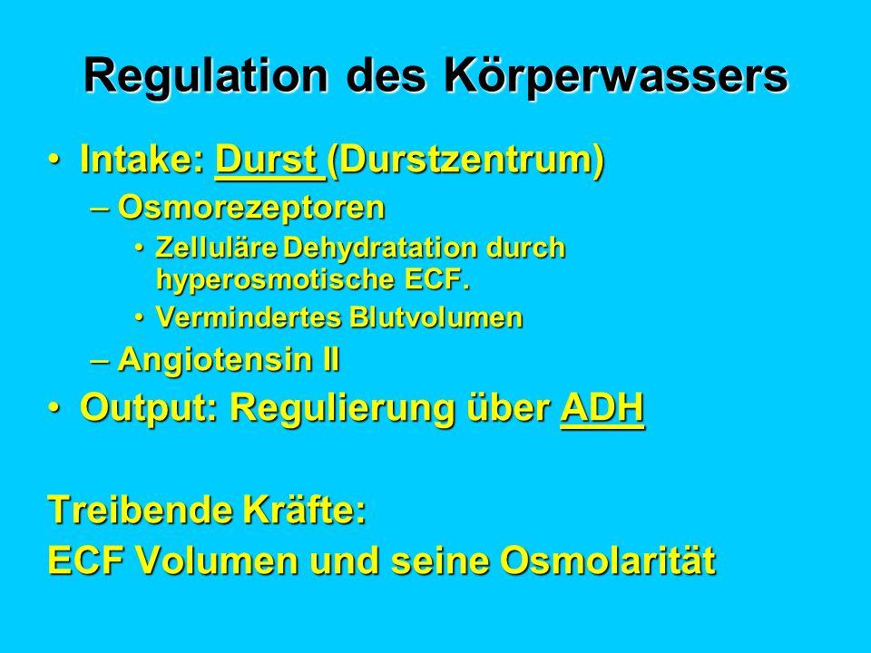 Regulation des Körperwassers Intake: Durst (Durstzentrum)Intake: Durst (Durstzentrum) –Osmorezeptoren Zelluläre Dehydratation durch hyperosmotische EC