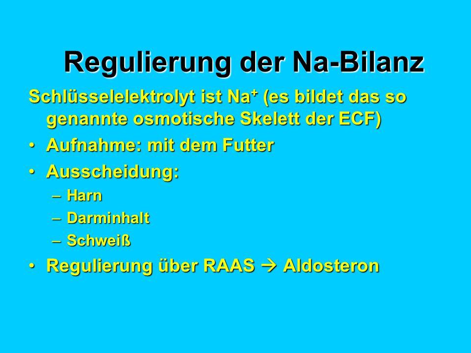 Regulierung der Na-Bilanz Schlüsselelektrolyt ist Na + (es bildet das so genannte osmotische Skelett der ECF) Aufnahme: mit dem FutterAufnahme: mit dem Futter Ausscheidung:Ausscheidung: –Harn –Darminhalt –Schweiß Regulierung über RAAS AldosteronRegulierung über RAAS Aldosteron