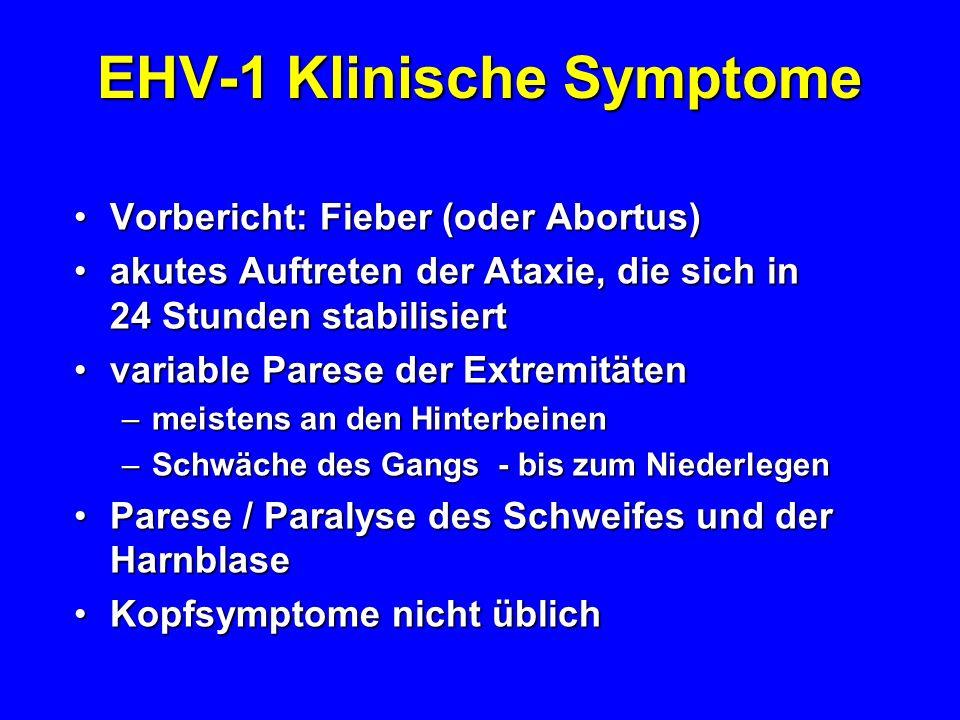 EHV-1 Klinische Symptome Vorbericht: Fieber (oder Abortus)Vorbericht: Fieber (oder Abortus) akutes Auftreten der Ataxie, die sich in 24 Stunden stabil