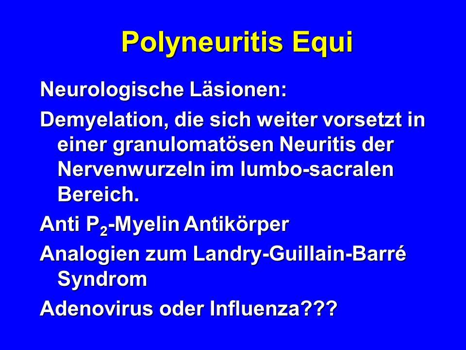 Polyneuritis Equi Neurologische Läsionen: Demyelation, die sich weiter vorsetzt in einer granulomatösen Neuritis der Nervenwurzeln im lumbo-sacralen B