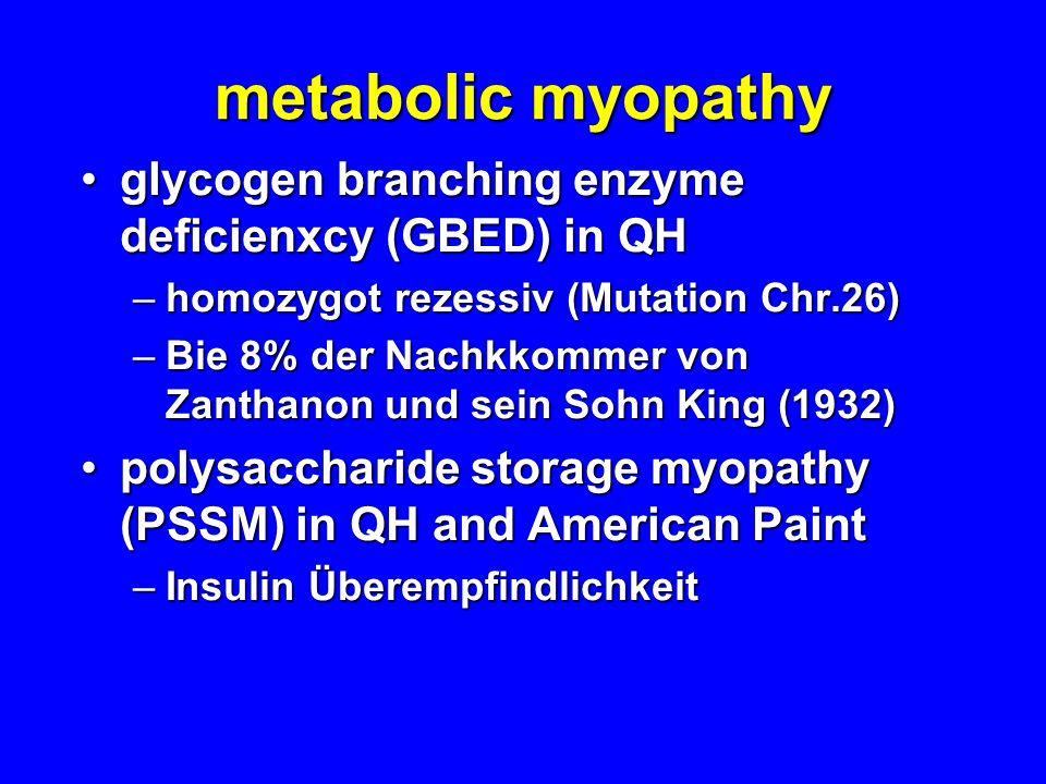metabolic myopathy glycogen branching enzyme deficienxcy (GBED) in QHglycogen branching enzyme deficienxcy (GBED) in QH –homozygot rezessiv (Mutation