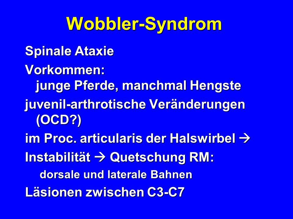Wobbler-Syndrom Spinale Ataxie Vorkommen: junge Pferde, manchmal Hengste juvenil-arthrotische Veränderungen (OCD?) im Proc. articularis der Halswirbel