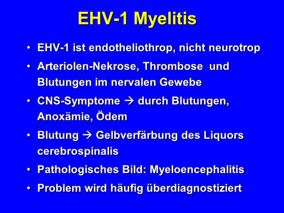 EHV-1 Myelitis EHV-1 ist endotheliothrop, nicht neurotropEHV-1 ist endotheliothrop, nicht neurotrop Arteriolen-Nekrose, Thrombose und Blutungen im ner