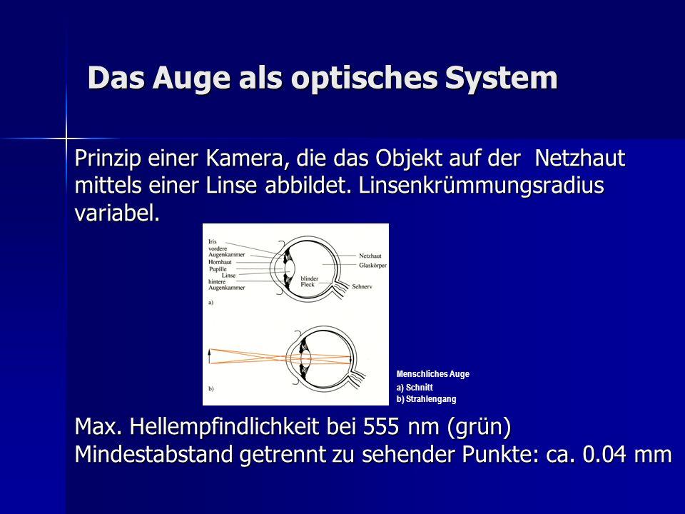 Die hintere Augenkammer Hintere Augenkammer: Irishinterfläche, Irishinterfläche, Processus ciliares Processus ciliares Zonula Zinnii Zonula Zinnii Linsenhinterfläche Linsenhinterfläche