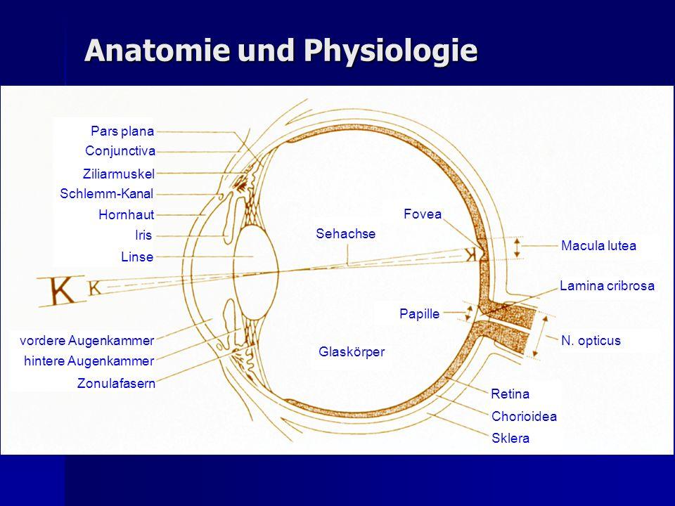 Das Kammerwasser Produziert im nichtpigmentierten Anteil des Ziliarkörpers Produziert im nichtpigmentierten Anteil des Ziliarkörpers Vordere und hintere Augenkammer sind mit durchsichtigem Kammerwasser gefüllt, das von hinten durch die Pupille in die vordere Augenkammer übertritt, denn die Irisfläche liegt der Linsenkapsel nur ganz lose auf Vordere und hintere Augenkammer sind mit durchsichtigem Kammerwasser gefüllt, das von hinten durch die Pupille in die vordere Augenkammer übertritt, denn die Irisfläche liegt der Linsenkapsel nur ganz lose auf