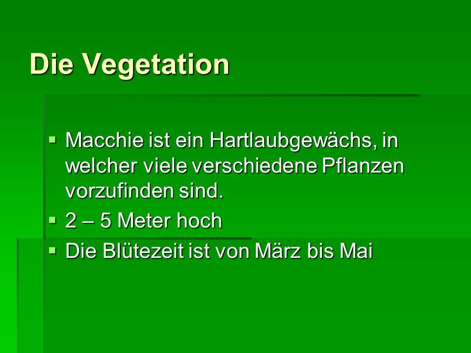 Die Vegetation Macchie ist ein Hartlaubgewächs, in welcher viele verschiedene Pflanzen vorzufinden sind. Macchie ist ein Hartlaubgewächs, in welcher v