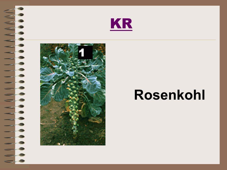 KR Rosenkohl