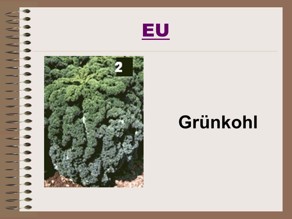 EU Grünkohl