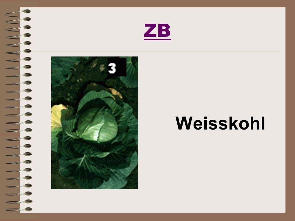 ZB Weisskohl