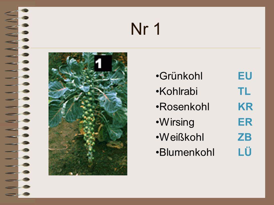 Nr 1 Grünkohl EU Kohlrabi TL Rosenkohl KR Wirsing ER WeißkohlZB BlumenkohlLÜ