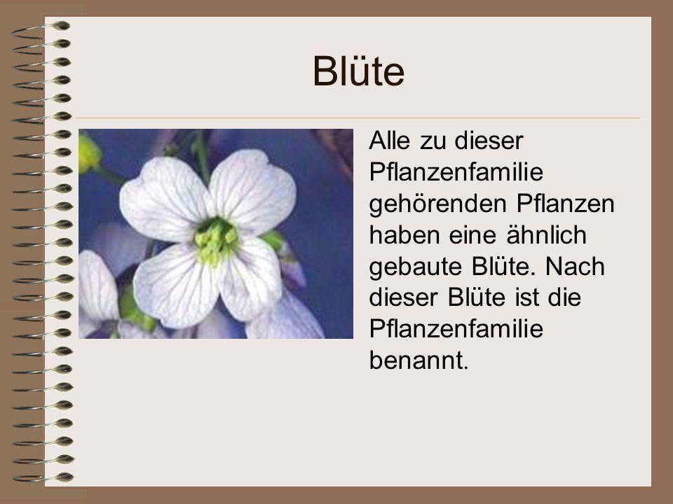 Blüte Alle zu dieser Pflanzenfamilie gehörenden Pflanzen haben eine ähnlich gebaute Blüte.