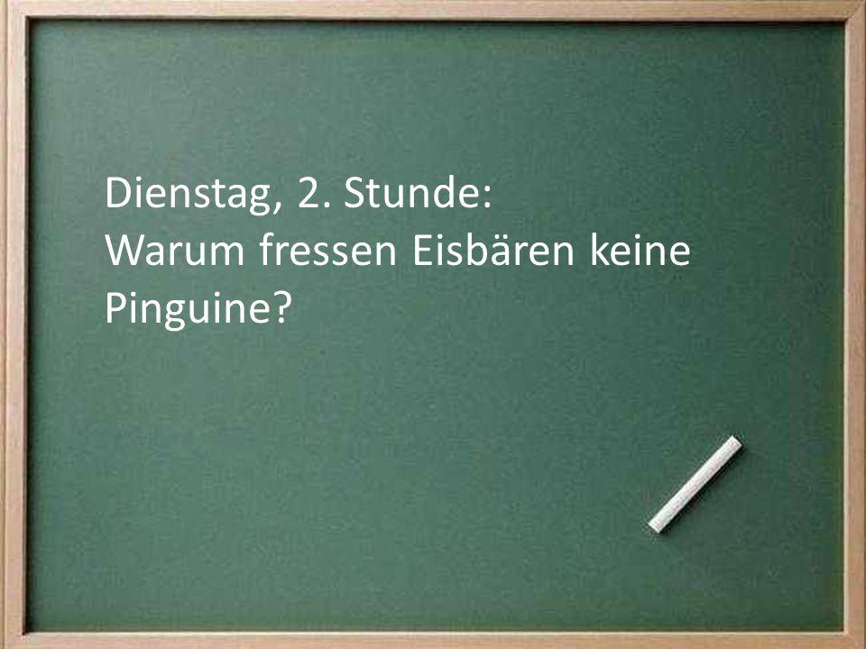 Dienstag, 2. Stunde: Warum fressen Eisbären keine Pinguine?