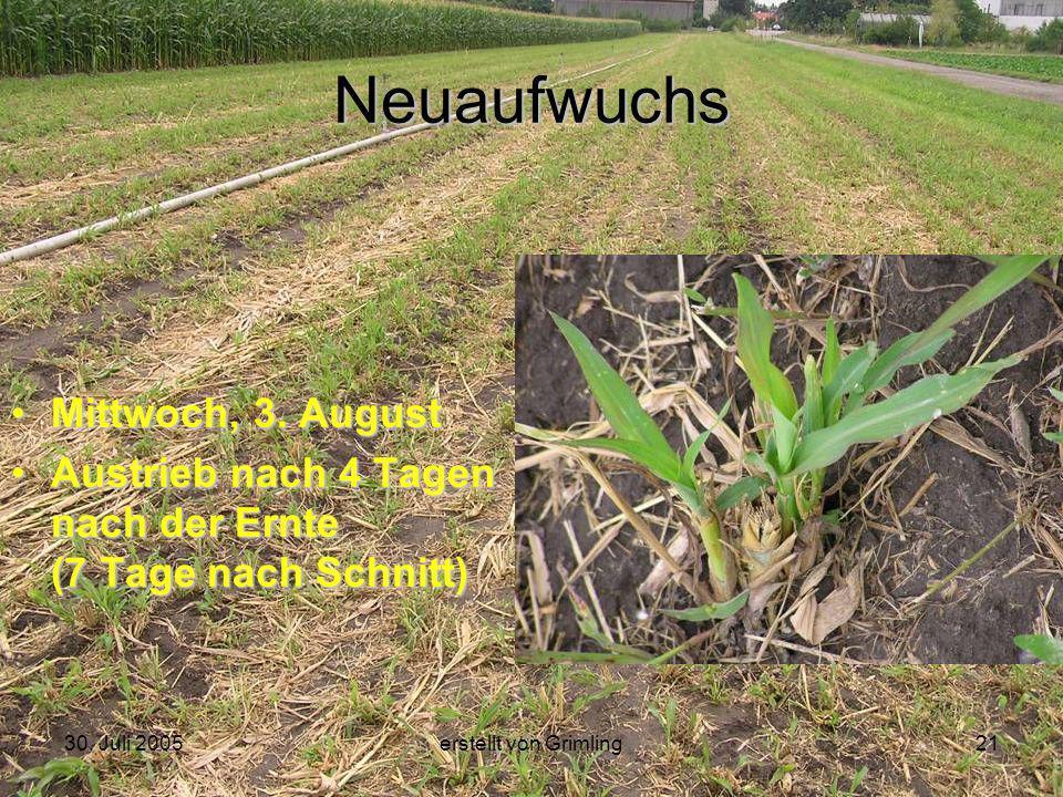 30. Juli 2005erstellt von Grimling21 Neuaufwuchs Mittwoch, 3. August Austrieb nach 4 Tagen nach der Ernte (7 Tage nach Schnitt)