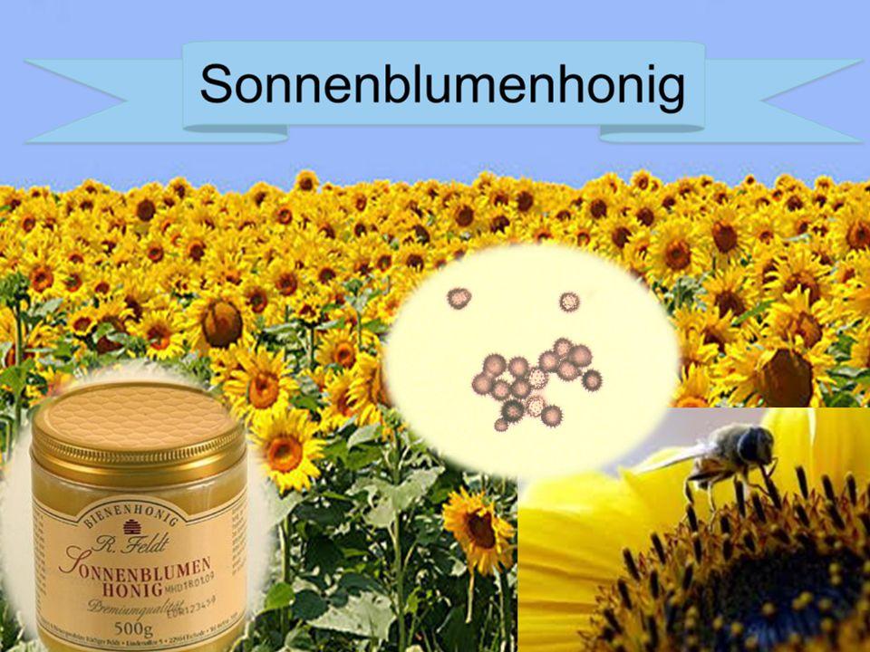 Sonnenblumenhoni