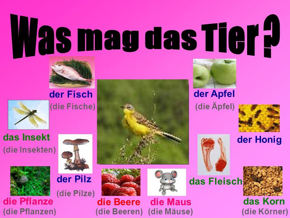 der Fisch der Apfel der Pilz (die Insekten) (die Pflanzen)(die Beeren) die Maus (die Mäuse) die Pflanze (die Fische) (die Pilze) die Beere (die Äpfel) der Honig das Fleisch das Korn (die Körner) das Insekt