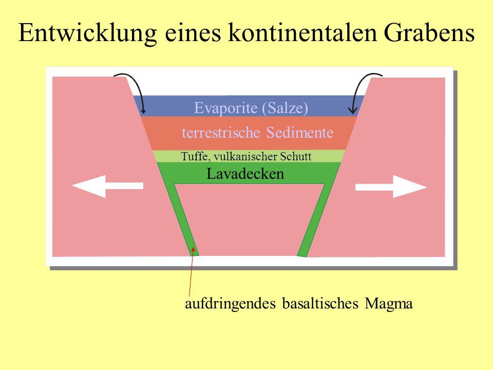 Entwicklung eines kontinentalen Grabens aufdringendes basaltisches Magma Lavadecken Tuffe, vulkanischer Schutt terrestrische Sedimente Evaporite (Salz