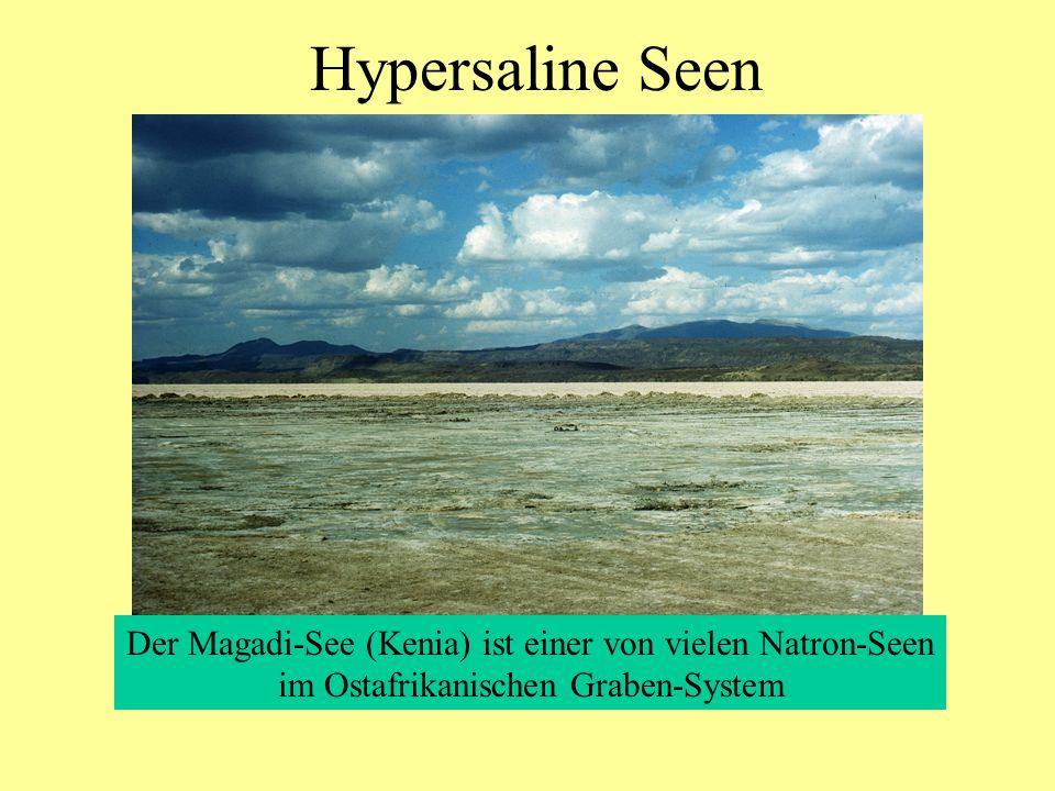 Hypersaline Seen Der Magadi-See (Kenia) ist einer von vielen Natron-Seen im Ostafrikanischen Graben-System