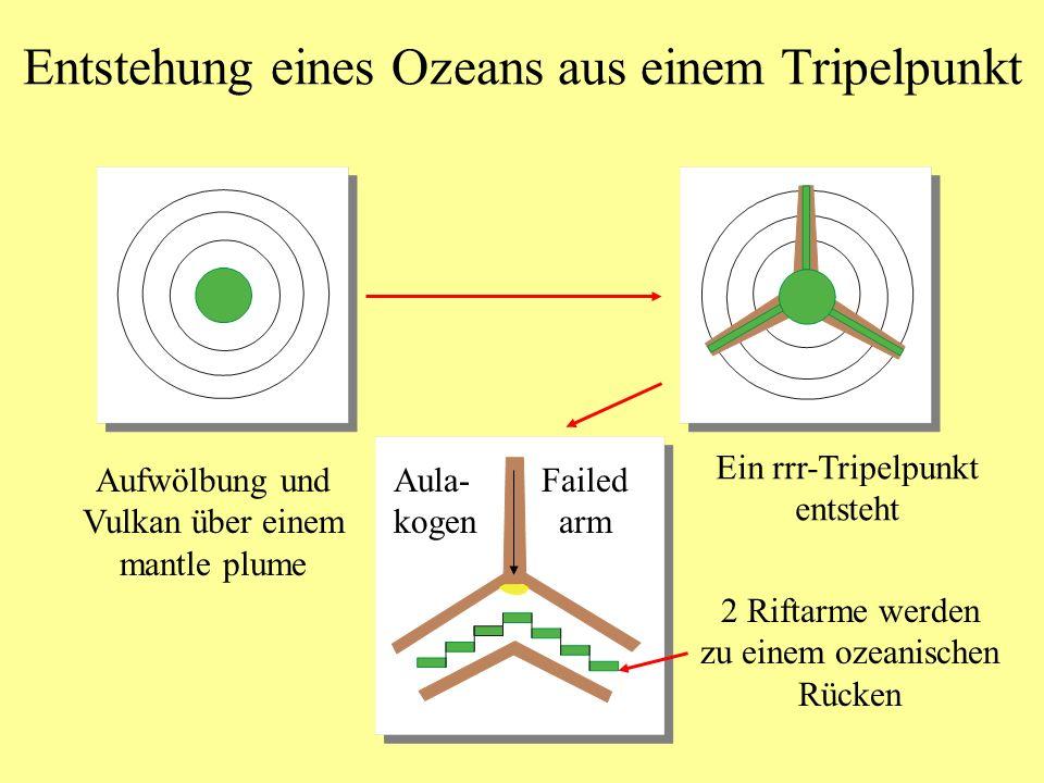 1.) Grabenbildung (Rifting, Taphrogenese) Beginnt mit einem Tripelpunkt auf kontinentaler Kruste Kreide Rezent Tripelpunkt Benue-Trog (Aulakogen) Rotes Meer Afar-Senke Golf von Aden Umgezeichnet nach Windley, 1996