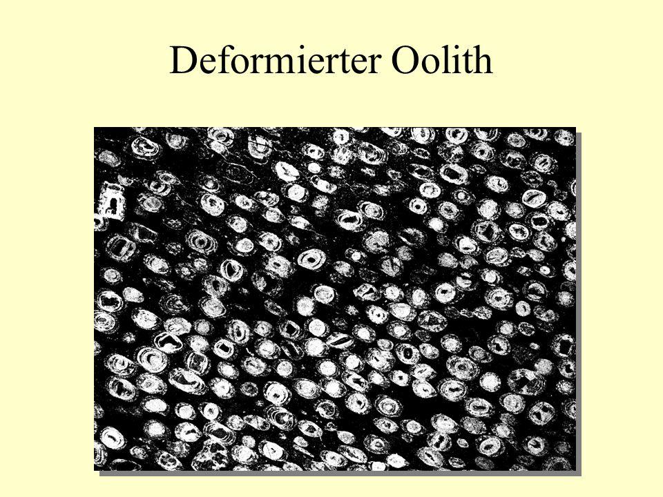 Deformierter Oolith