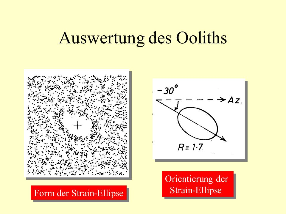 Auswertung des Ooliths Form der Strain-Ellipse Orientierung der Strain-Ellipse Orientierung der Strain-Ellipse