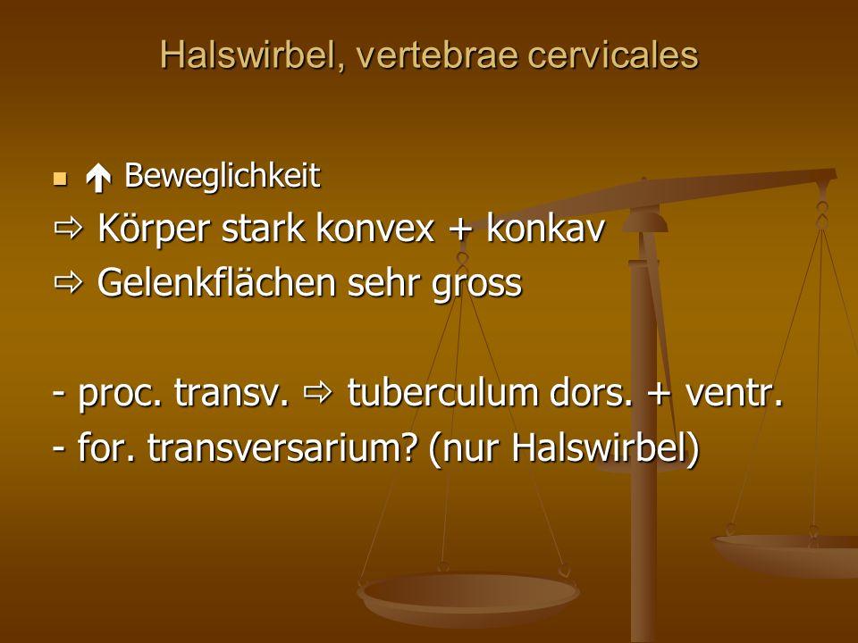 Halswirbel, vertebrae cervicales Beweglichkeit Beweglichkeit Körper stark konvex + konkav Körper stark konvex + konkav Gelenkflächen sehr gross Gelenkflächen sehr gross - proc.
