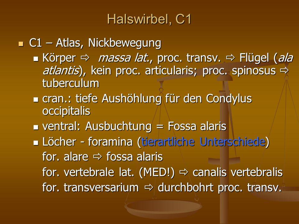 Halswirbel, C1 C1 – Atlas, Nickbewegung C1 – Atlas, Nickbewegung Körper massa lat., proc.
