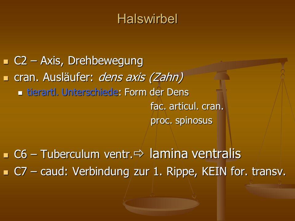 Halswirbel C2 – Axis, Drehbewegung C2 – Axis, Drehbewegung cran.