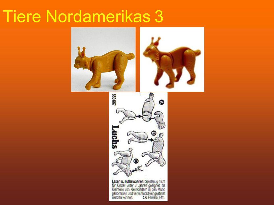 Tiere Nordamerikas 3