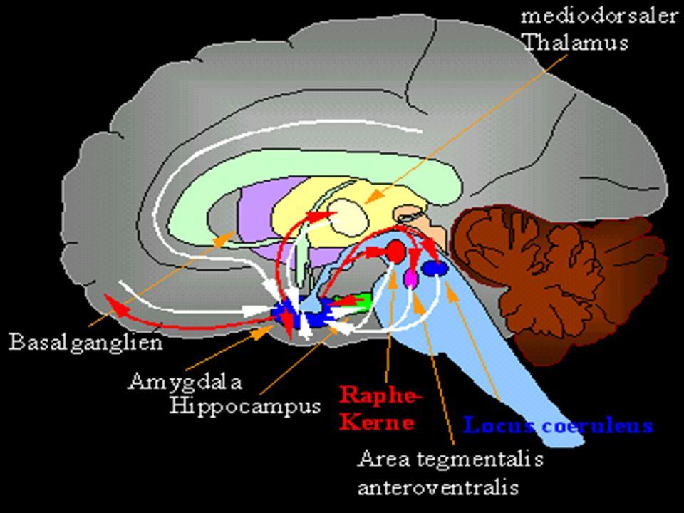 Störungen Genetische, neurochemische, chronobiologische, neuro- tiefen- oder lernpsychologische, soziale/soziologische BEFUNDE