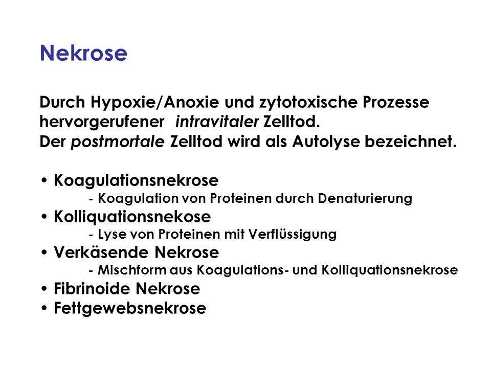 Durch Hypoxie/Anoxie und zytotoxische Prozesse hervorgerufener intravitaler Zelltod.