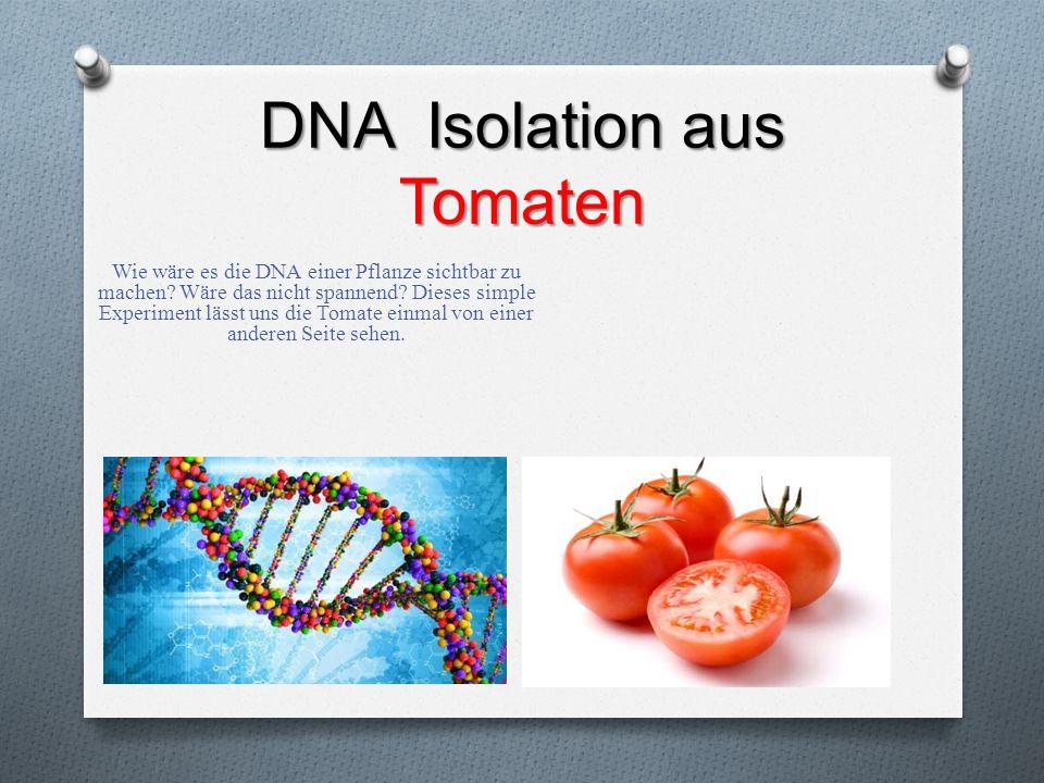 DNA Isolation aus Tomaten Wie wäre es die DNA einer Pflanze sichtbar zu machen? Wäre das nicht spannend? Dieses simple Experiment lässt uns die Tomate